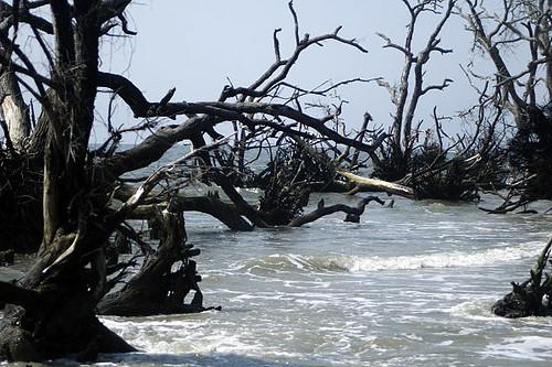Hunting Island Beach Erosion