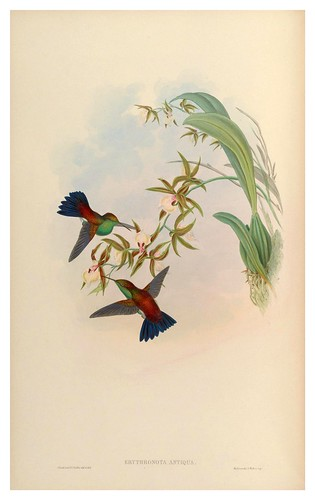 019-An introduction to the Trochilidae or family of humming-birds- Vol 5- 1861-John Gould