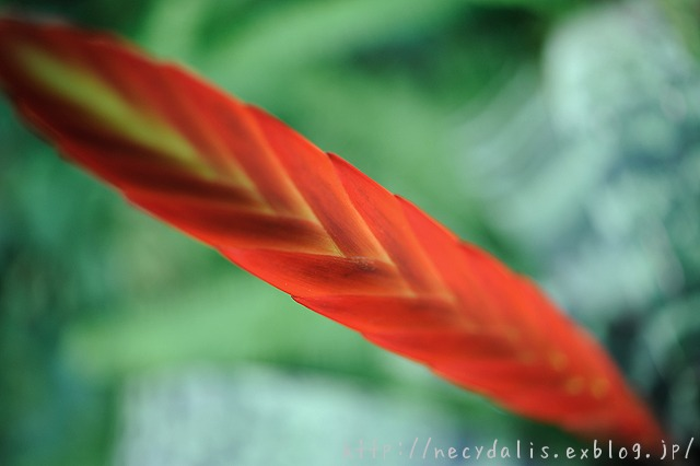 neon-hued red...
