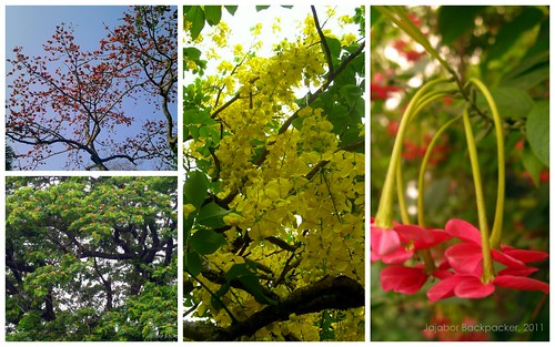 Flower Trees Collage