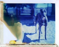Kino in Bagdad, AZ (moominsean) Tags: arizona greyhound playground polaroid kino bagdad 190 type108 thelittledoglaughed outwithsolexposure expired012000