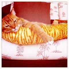 3-3-11 (mkrumm1023) Tags: sleeping cat nap kitty lazy