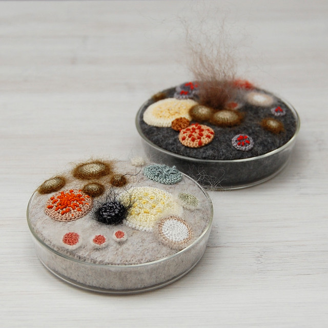 Two Petri Dishes