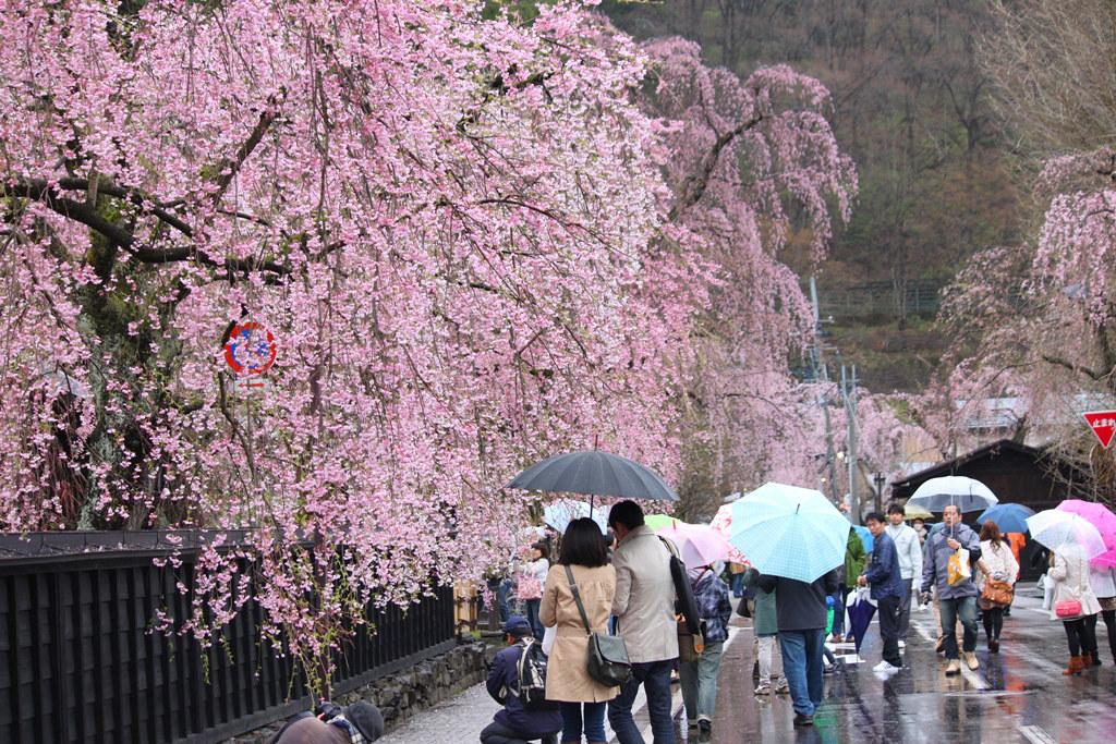 Tohoku Trip 1st day in Akita prefecture, Kakunodate (14)