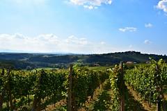 Trseki (anvelvet) Tags: gorice sky croatia medimurje svurban grapes wine hills nature landscape september