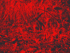 Red rabbit (Franois Tomasi) Tags: lapin rabbit nature campagne bois fort rouge red animal animals pov pointdevue pointofview light lights clairage filtre retouche black noir nikon google flickr tours indreetloire villedetours touraine france europe paint painting franois tomasi rojo rot