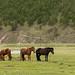 Vejam como são as baias dos cavalos por aqui