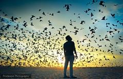 picturesque view (Pradeepa Pandiyan) Tags: chennai chennaimarinabeach chennaibeach marinabeach birds sky sunrise morning beach sand shore seashore silhouette