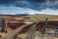 The Track to Anaboard (Geoff France) Tags: dava davamoor croft cottage ruin castlegrant heather moorland landscape scottishlandscape cairngorms cairngormsnationalpark outdoor