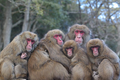 Extended family (Masashi Mochida) Tags: family monkey extended awaji naturesfinest coth supershot abigfave