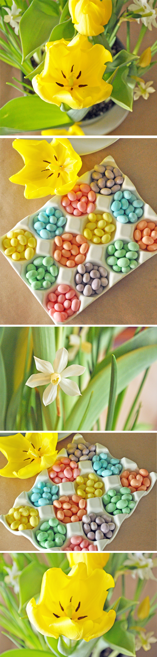 Spring-Blooms-and-Jellybean