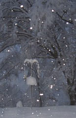 bird feeder snow