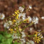 Wildflower_Center_128 thumbnail