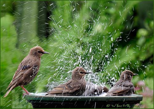 Their-First-Bath