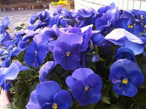 04iPhone4 Flower2