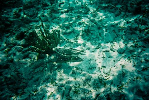 Coral Reef Fish, John Pennekamp, Key Largo Florida