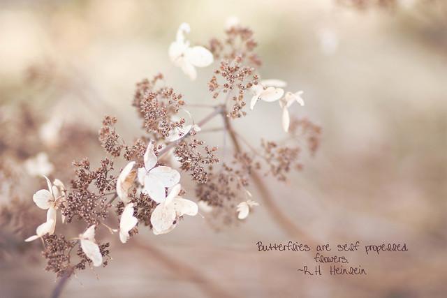 365: 129 Butterflies