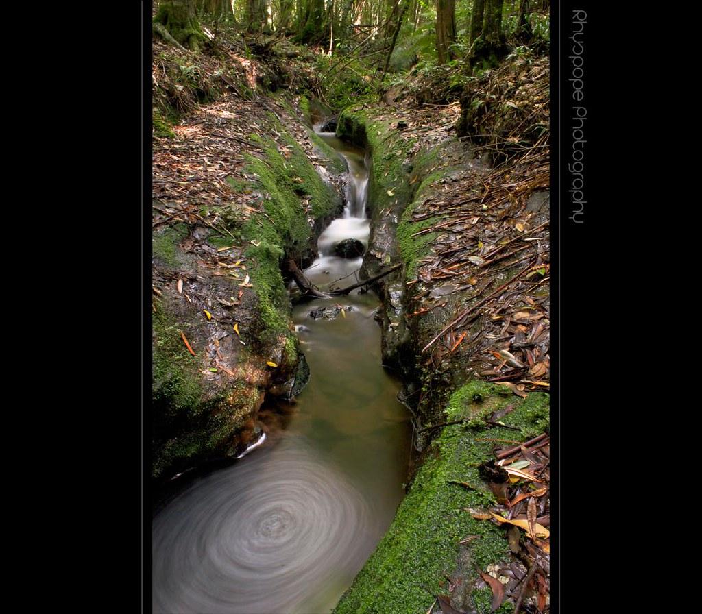 Rainforest Stream - Mount Wilson