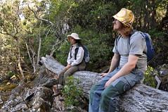 tasmania 2011 - b1 mount barrow dk (liam.jon_d) Tags: portrait rain forest landscape rainforest mt state reserve australia mount pete tasmania myrtle beech barrow shannan nothofagus portraitset cunninghamii billdoyle