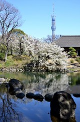 Japanese garden and Tokyo Sky Tree.