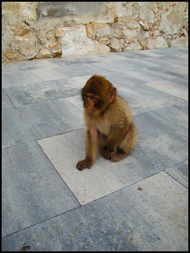 Mirador de los Monos (3)