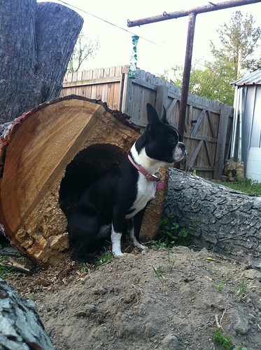 She was sitting with her butt in the hole of the log