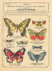 cahier lépidoptères