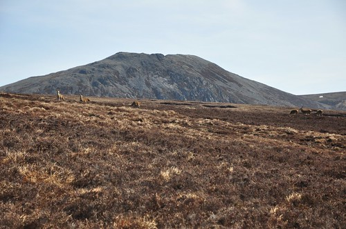 Deer below Meall na Spionaig