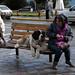 Il tipico San Bernardo di Bariloche a riposo