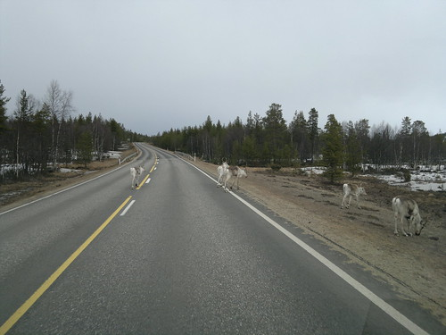 Warning, reindeer crossing