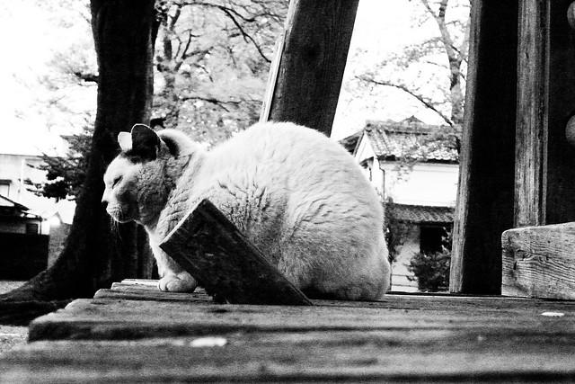Today's Cat@2011-04-24