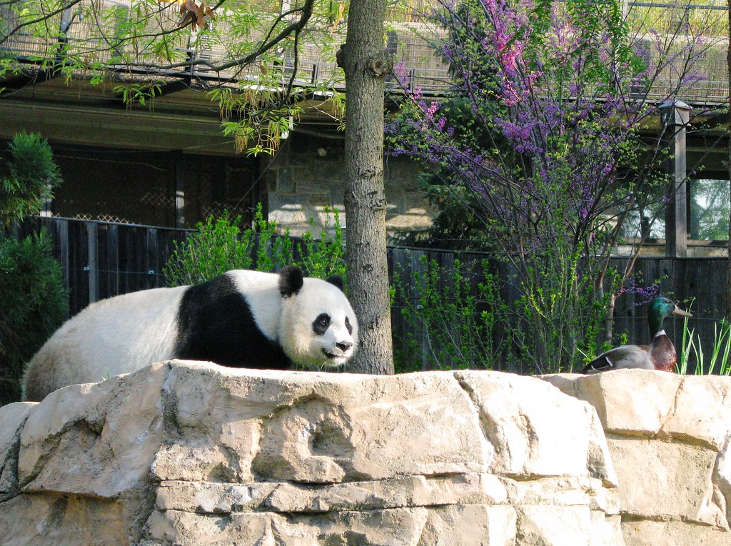 "Mei: ""Tian, we're having Peking Duck tonight."""