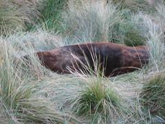Hooker Seal