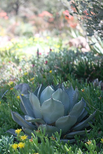 17. Succulent