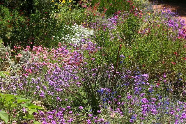 18. Wildflowers