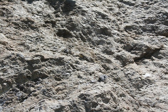 25. Can you spot the whiptail lizard?