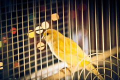 light slr bird film birds yellow death lights for 1 little bokeh films cab grain hipster beak young olympus cage cutie lightleak finch grains canary hip grainy om talking leak om1 ster filmy