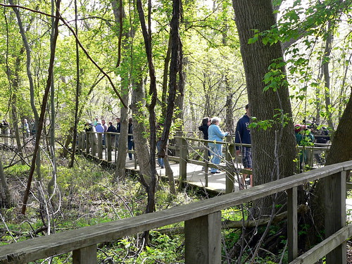 Birders on the Boardwalk