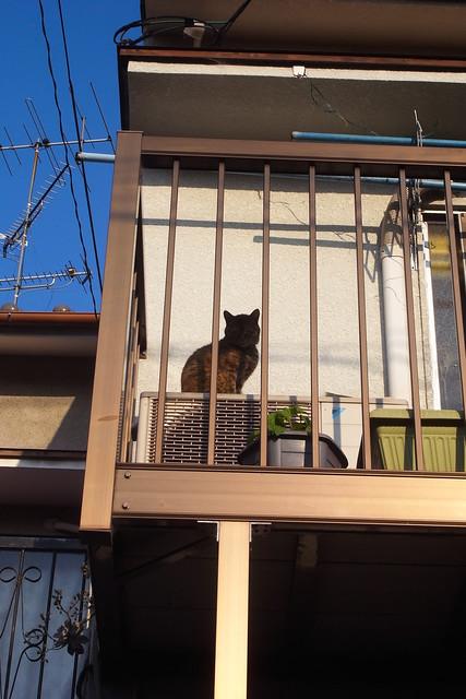 Today's Cat@2011-05-18