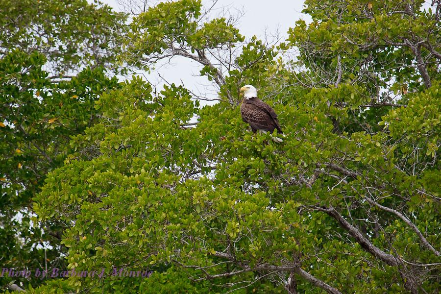Everglades National Park-10,000 Islands (10 of 16)