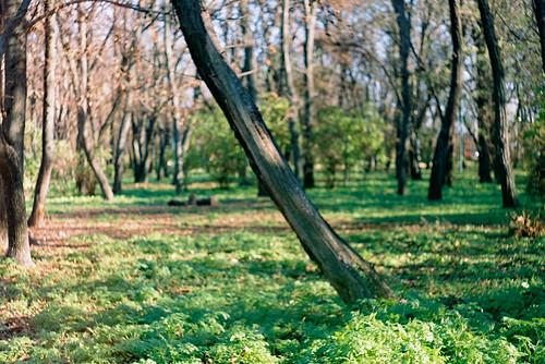 ��������, ����������� ����. Taganrog, Central park.