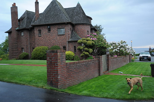Rosie on the lawn of her Blue Ridge Castle, topiary, flowering trees, truck, lawn, newspaper, Seattle, Washington, USA by Wonderlane