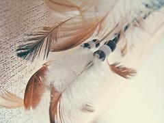 Trap of dreams (Dariyal) Tags: brown beige magic feathers indians whiff cys awall amyth trapofdreams