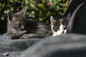 Two stray kittens