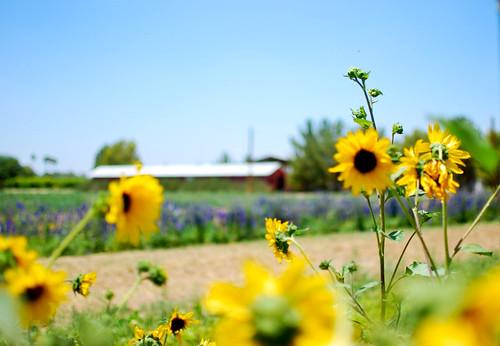 flowers1-0081