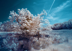 IMG_3414 (Excaliber2013) Tags: ir infrared lifepixel marshlandsconservancy