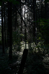 (calaberro) Tags: trees nature pine forest landscape woods shadows lightfall canonef28mmf18usm