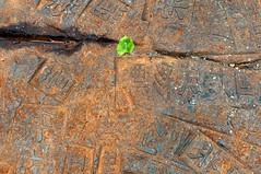 Hu Xiangcheng - Dinosaur Skin, 2010 [detail] (de_buurman) Tags: sculpture art kunst beelden sculptuur exhibit exhibition nikkor tentoonstelling allrightsreserved nikond300 debuurman edjansen 35mmf18g denhaagonderdehemel huxiangcheng