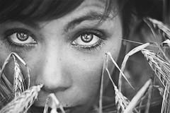 Trovami. (mickiky) Tags: portrait woman sun selfportrait me look myself blackwhite donna eyes cornfield wheat grain occhi sguardo campo autoritratto remotecontrol sole ritratto biancoenero autoscatto grano