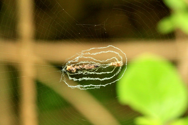 Debris Spider